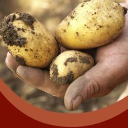 рука  с картофелем