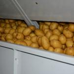 Мытый картофель премиум класса