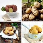Картофель наша работа